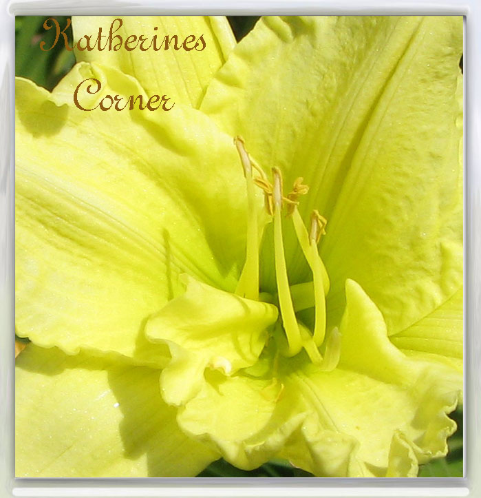 Wordless Wednesday Yellow Lily
