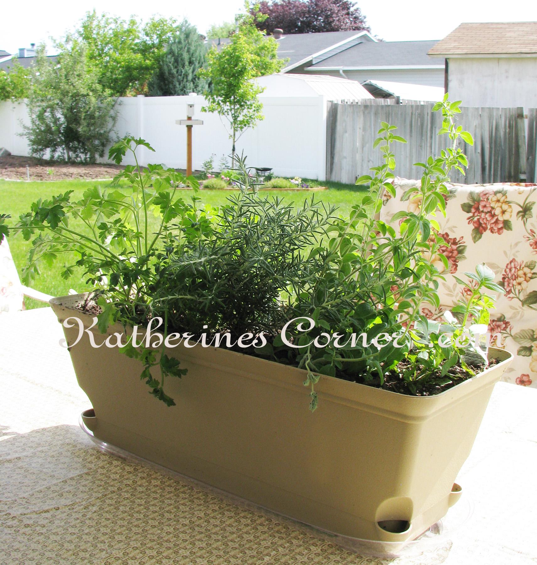 Wordless Wednesday Herb Garden