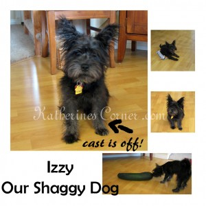 Wordless Wednesday Shaggy Dog