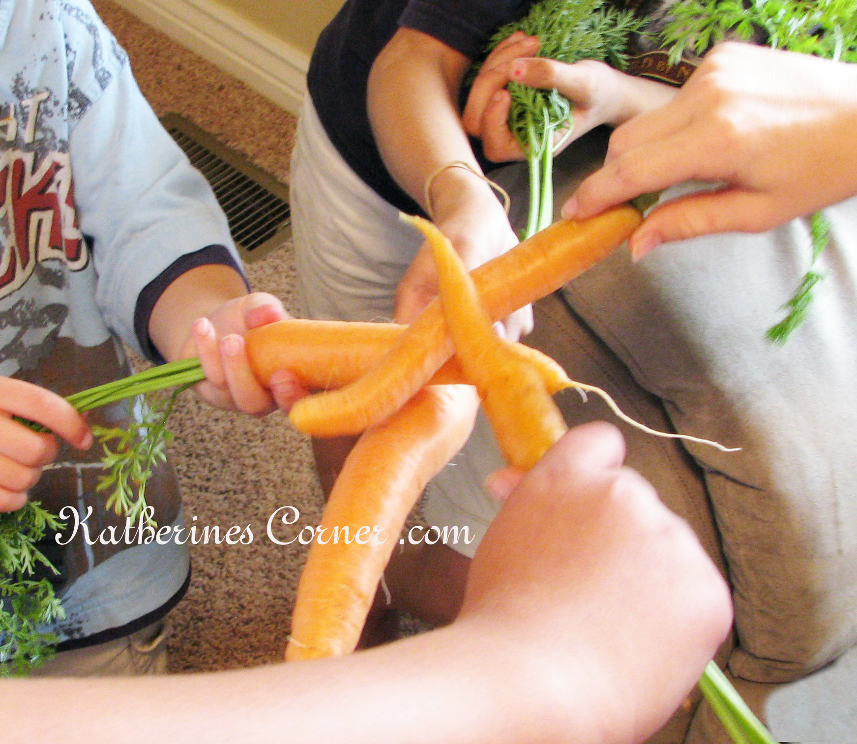 Wordless Wednesday Carrots