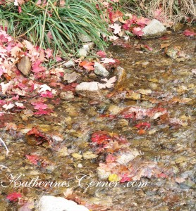 Autumn Stream
