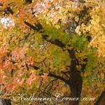 autumn trees 1 katherines corner