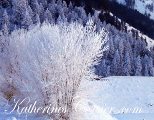 winter bush katherines corner copy