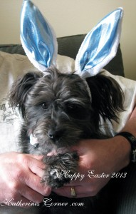 Easter puppy Katherines Corner
