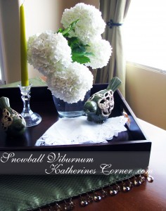 Snowball Viburnum katherines corner