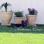 schapso dog Izzy 1 katherines corner