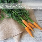 fresh garden carrots Katherines Corner