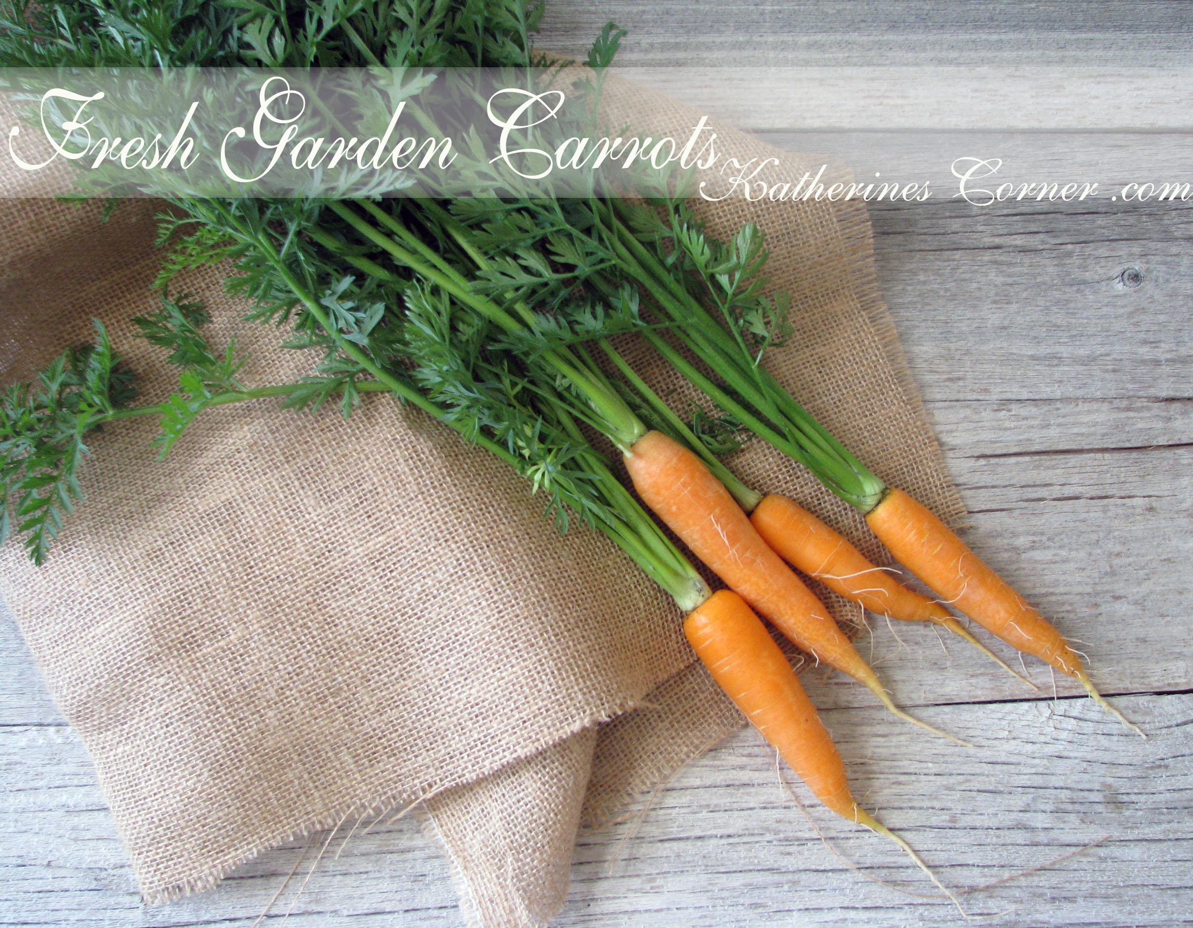 Carrots Are Not Just For Bunnies