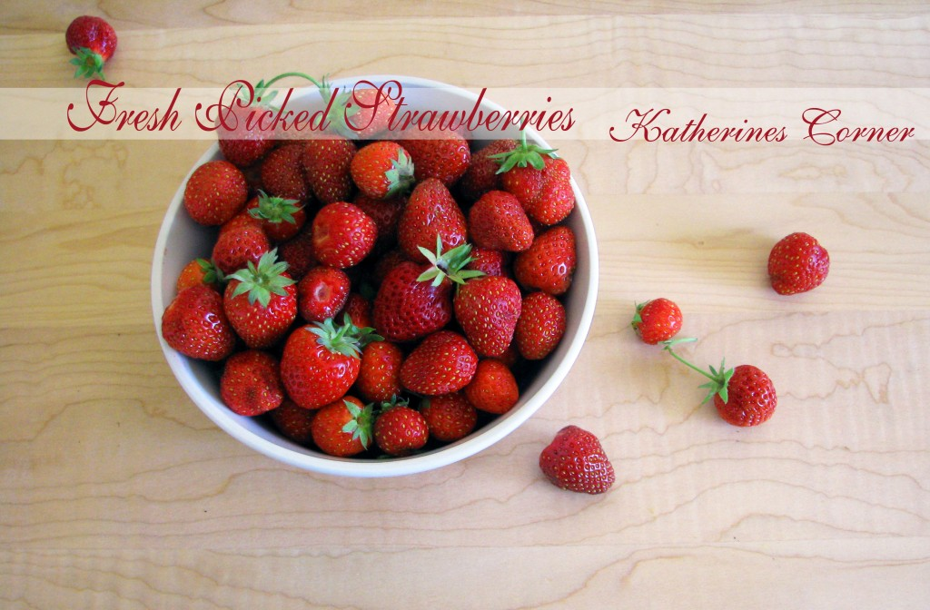 fresh picked strawberries katherines corner