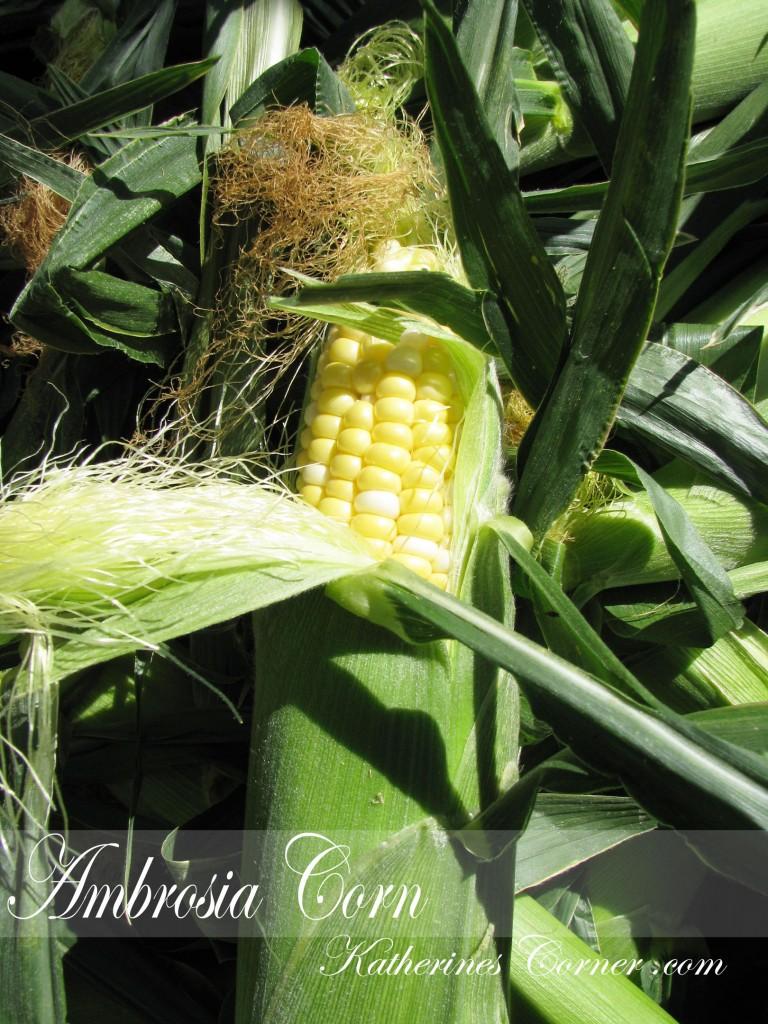 ambrosia corn