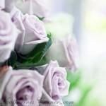 violet roses