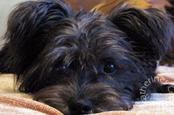 Izzy The Blog Dog