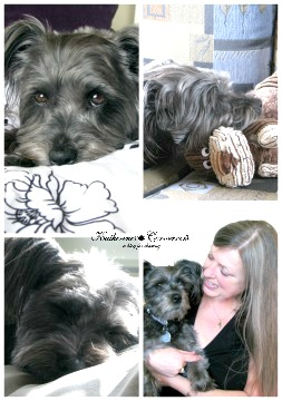 izzy the blog dog is a schapso