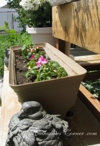 container gardening katherines corner
