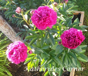 thursday favorite things blog hop peonies