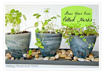 grow your own potted herbs