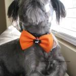 izzy halloween bow tie