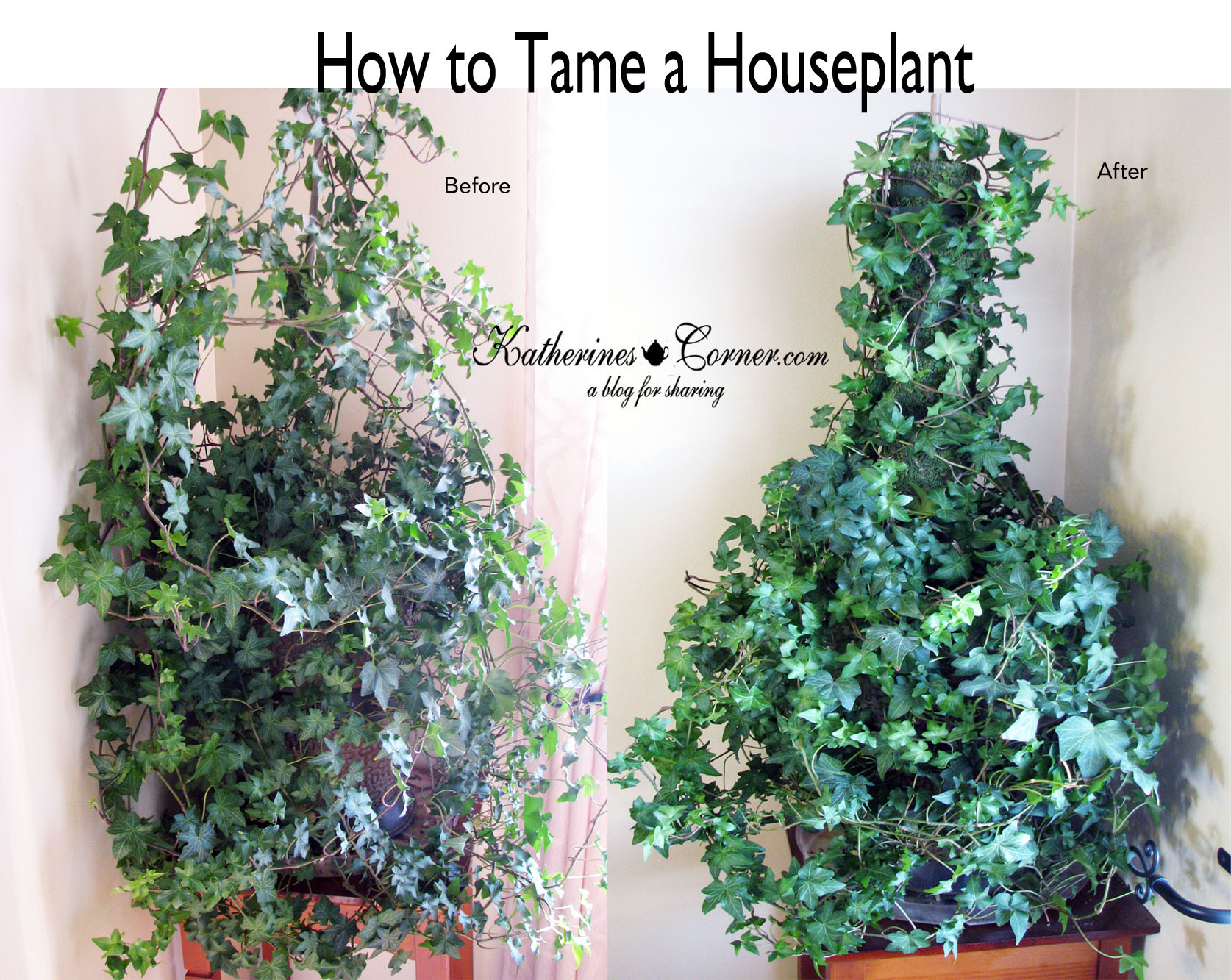 How To Tame A Houseplant
