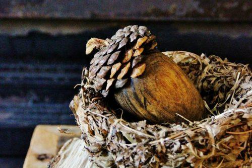 diy pine cone into acorn