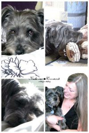 Izzy the blog dog, Schapso dog breed
