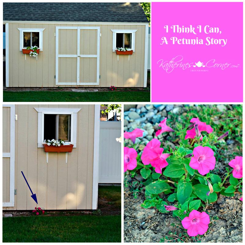 I Think I Can, A Petunia Story