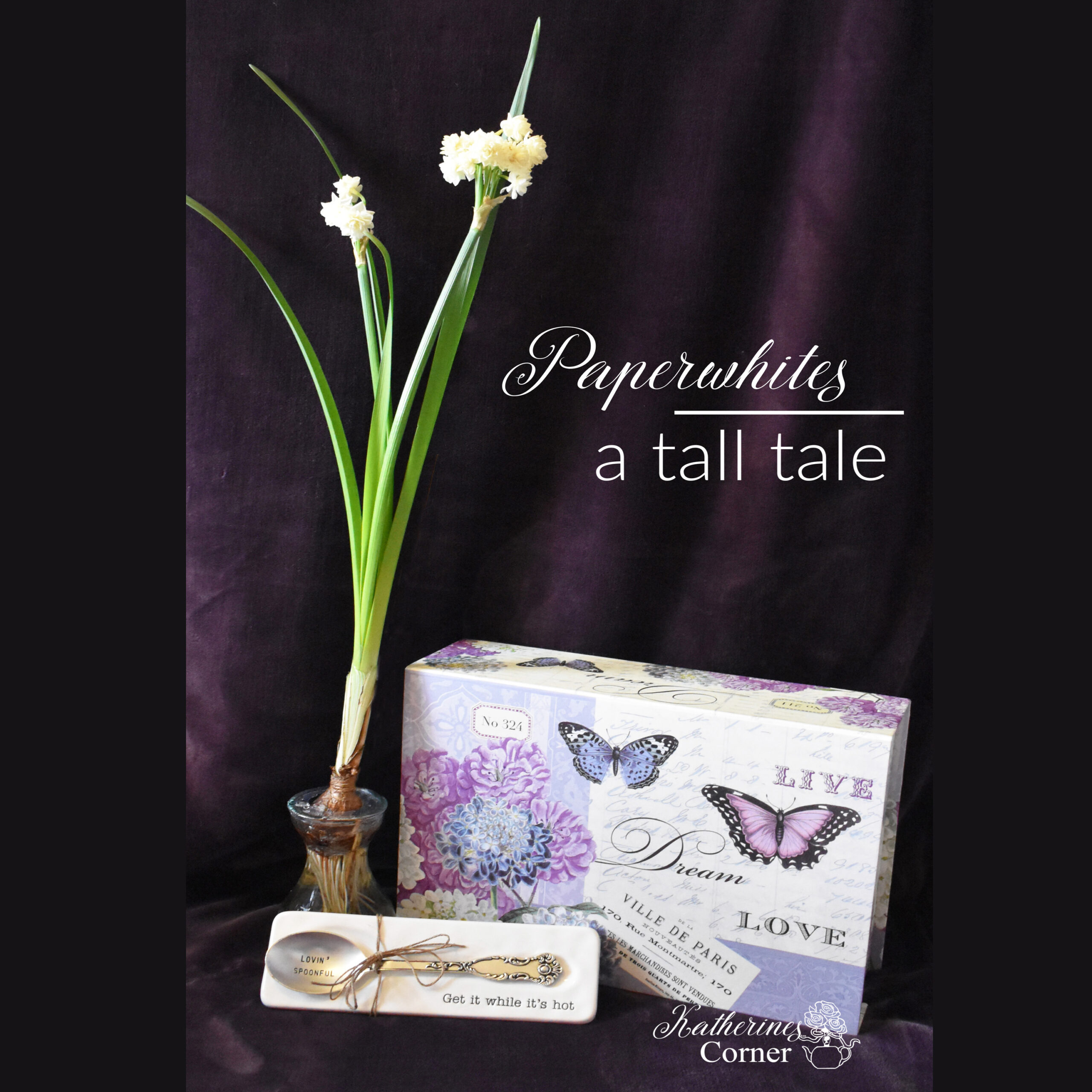 Paperwhites a Tall Tale