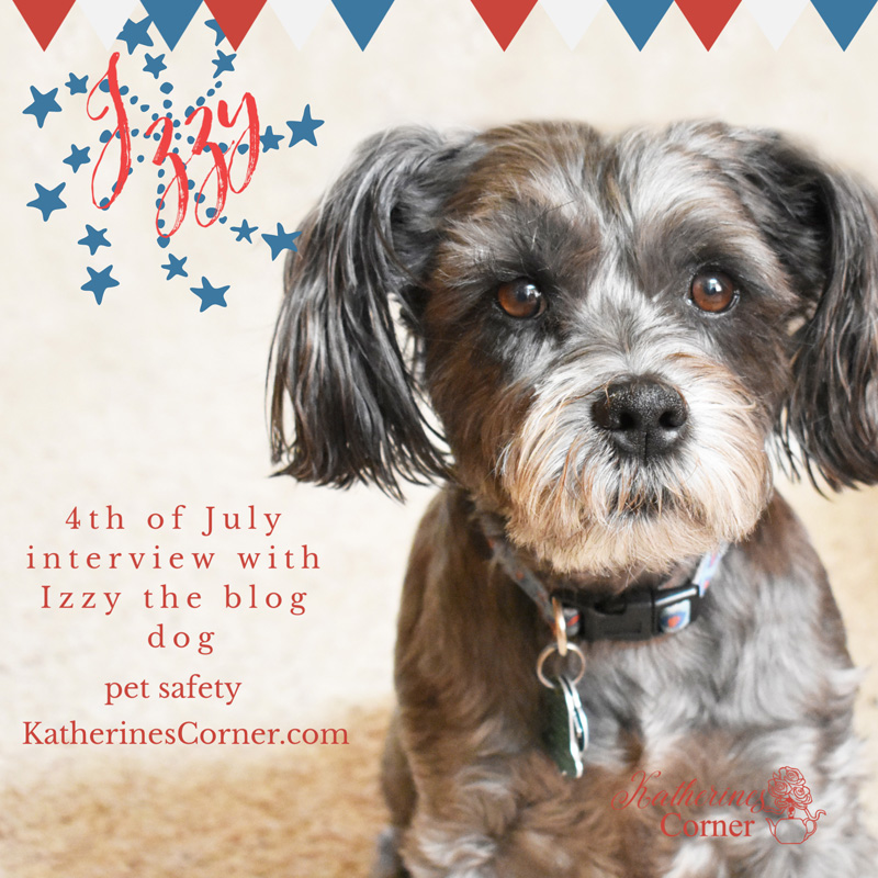 A 4th of July Interview with Izzy the Blog Dog