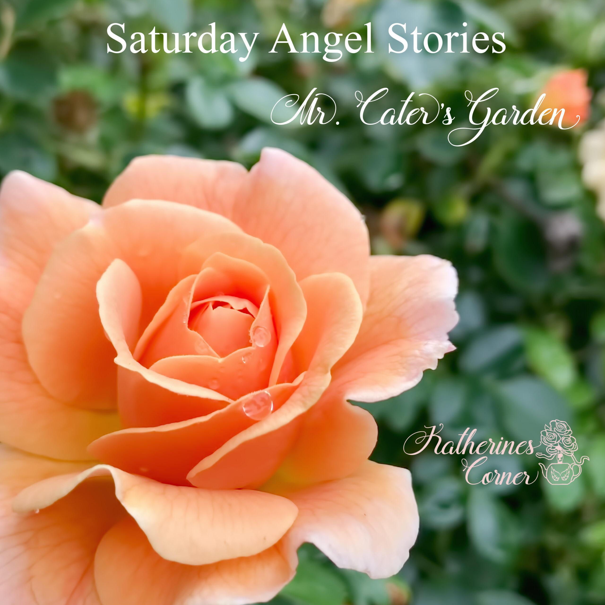 Saturday Angel Stories Mr. Caters Garden
