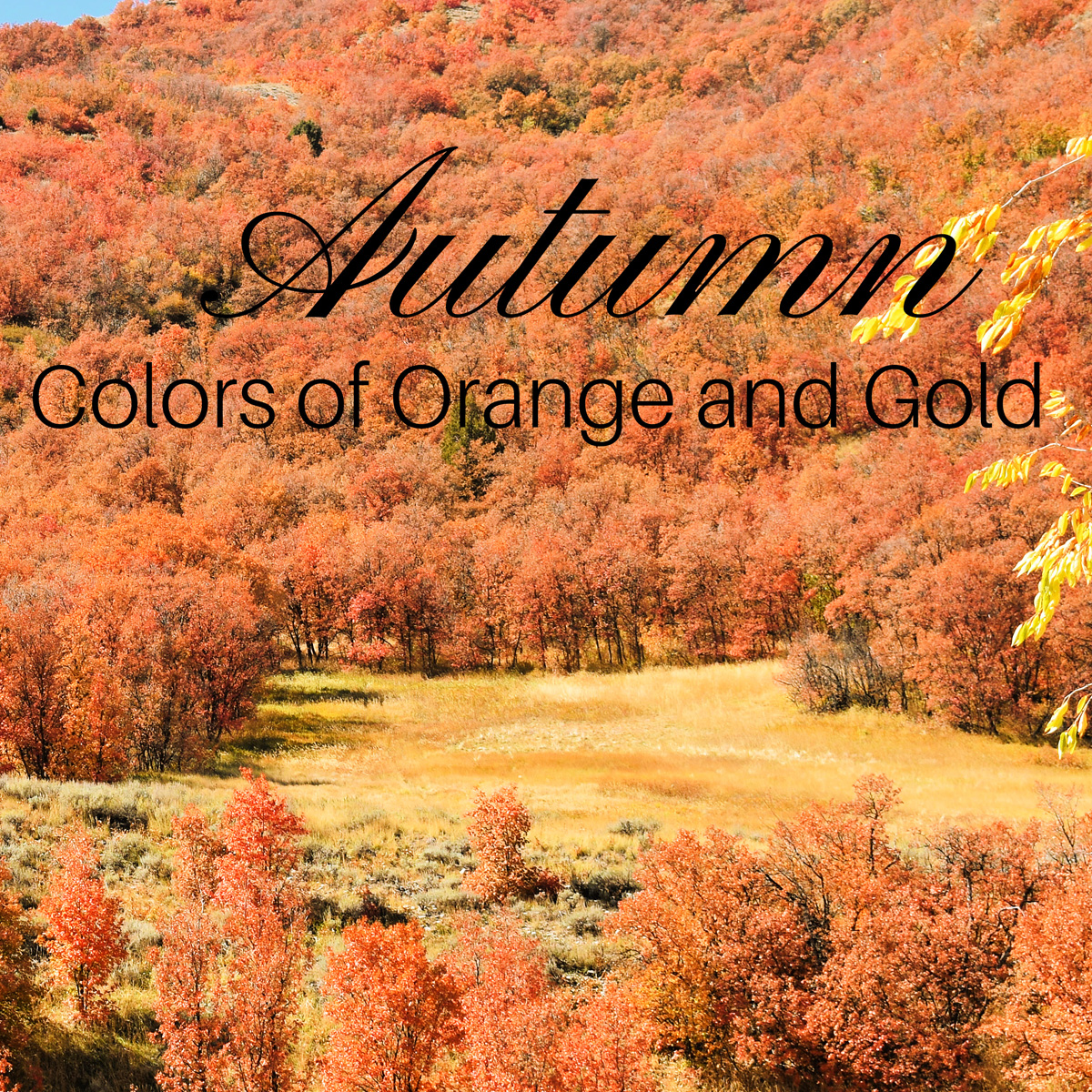 Autumn Colors of Orange and Gold